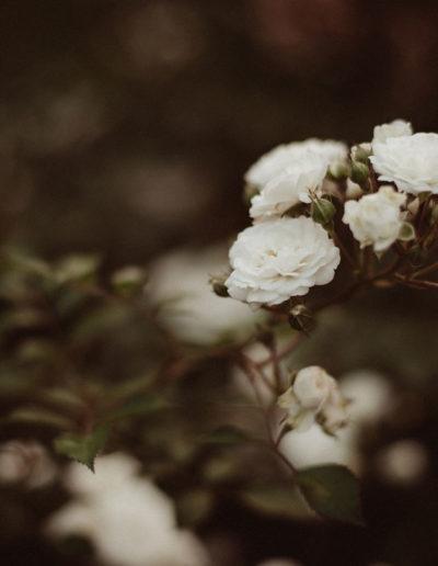 Biała róża Monika Borlin Photography wydruk print fotografia autorska plakat aranżacja wnętrz dekoracja Warszawa