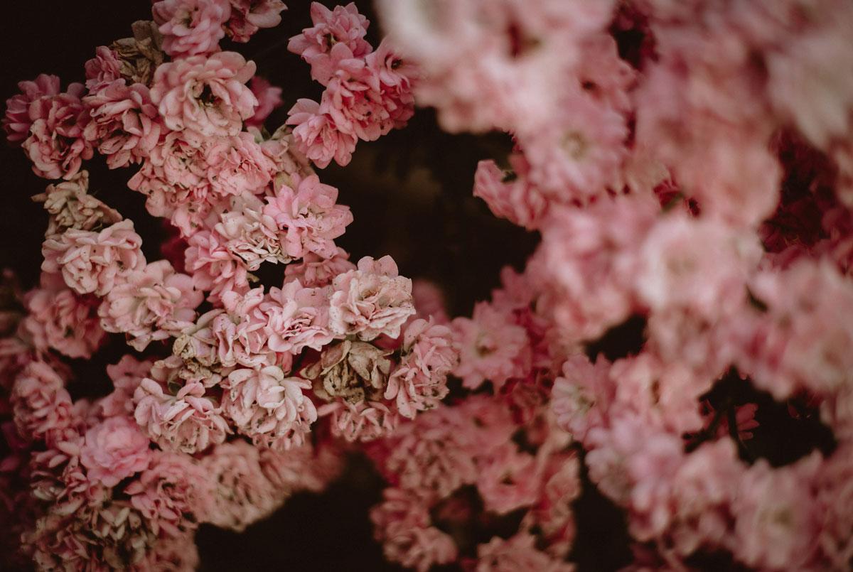 Faded roses Monika Borlin Photography wydruk print fotografia autorska plakat aranżacja wnętrz dekoracja Warszawa