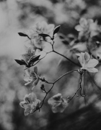 Grey flowers 01 Monika Borlin Photography wydruk print fotografia autorska plakat aranżacja wnętrz dekoracja Warszawa