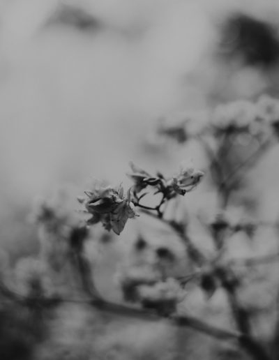 Grey flowers 02 Monika Borlin Photography wydruk print fotografia autorska plakat aranżacja wnętrz dekoracja Warszawa