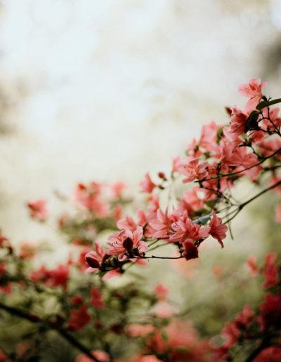Kwiaty o wschodzie Monika Borlin Photography wydruk print fotografia autorska plakat aranżacja wnętrz dekoracja Warszawa