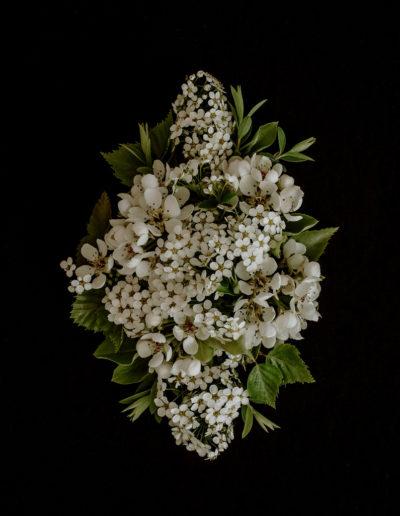 Kwiaty w bieli 01 Monika Borlin Photography wydruk print fotografia autorska plakat aranżacja wnętrz dekoracja Warszawa