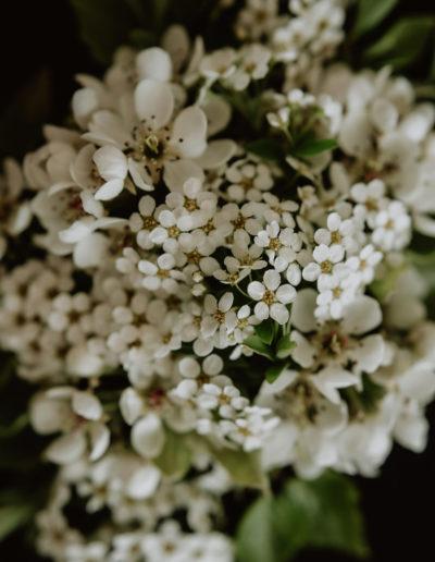 Kwiaty w bieli 02 Monika Borlin Photography wydruk print fotografia autorska plakat aranżacja wnętrz dekoracja Warszawa