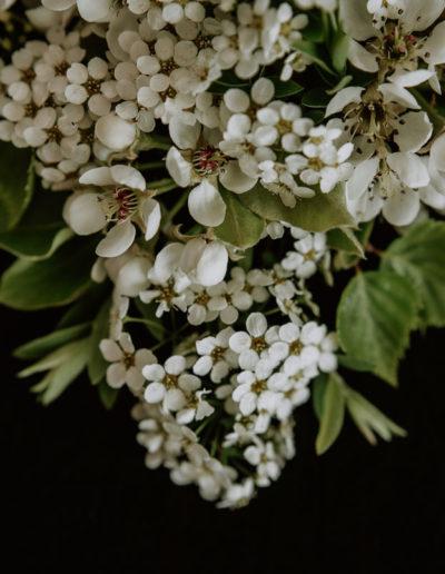 Kwiaty w bieli 04 Monika Borlin Photography wydruk print fotografia autorska plakat aranżacja wnętrz dekoracja Warszawa
