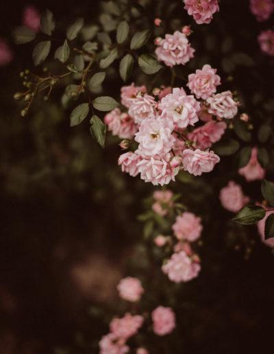 Pink roses Monika Borlin Photography wydruk print fotografia autorska plakat aranżacja wnętrz dekoracja Warszawa