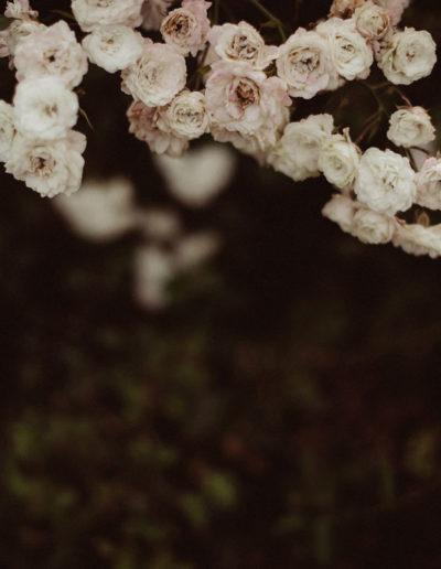 Różany łuk Monika Borlin Photography wydruk print fotografia autorska plakat aranżacja wnętrz dekoracja Warszawa